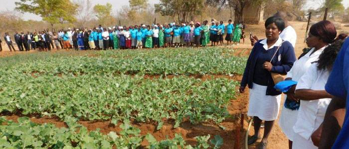 Women and Land in Zimbabwe